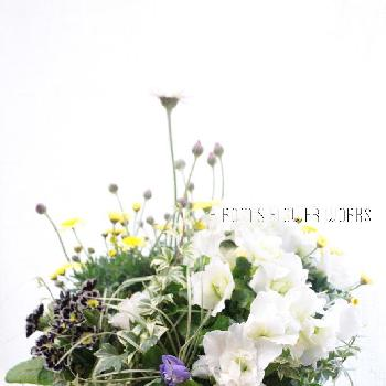 hirom's flower worksさんの画像