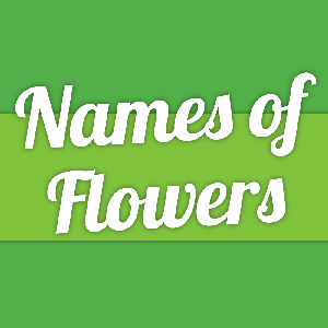 Names of Flowers