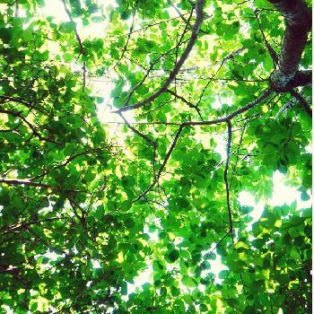 木洩れ陽の投稿画像一覧 🍀Green...