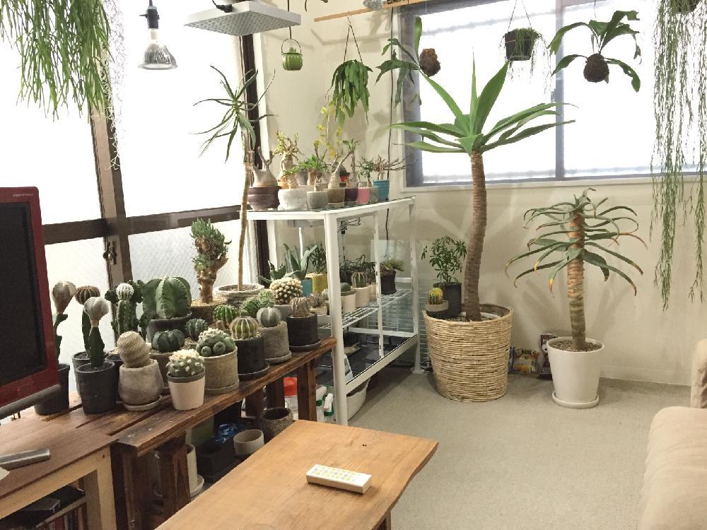 発表中! 観葉植物のある部屋 イベント RoomClip,  …