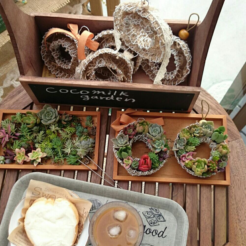 多肉植物の投稿画像kyirkさん マイ・コレクションとガーデン雑貨と