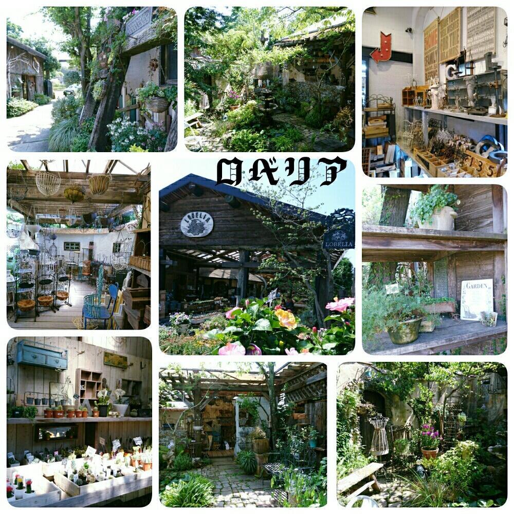 ロベリア自慢のコンテナ ... - higuchi-zouen.com