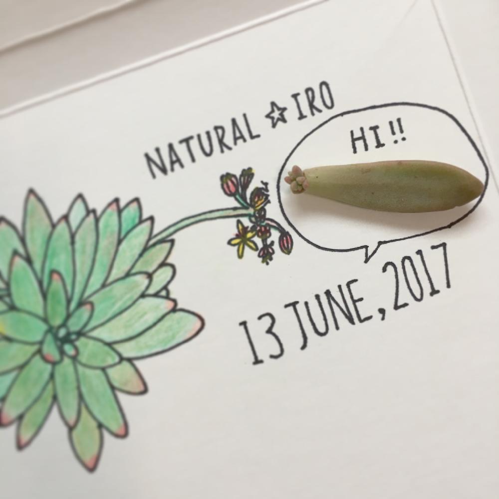 多肉植物の投稿画像 by natural ✩ iroさん|イラストと記念撮影と