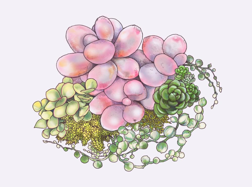 斑入りグリーンネックレスの投稿画像 By Jeyさん多肉植物と壁紙に