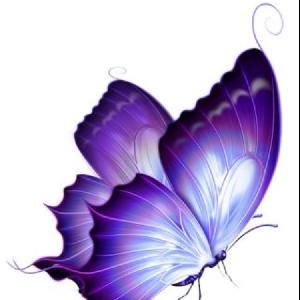 purple butterfly♪