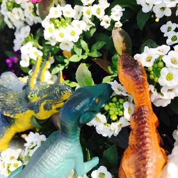 花と恐竜の投稿画像一覧 🍀Green...