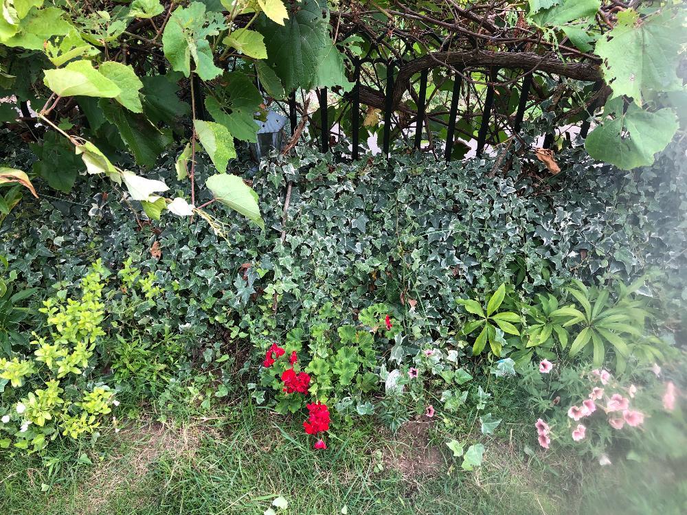 ガーデン ブログ
