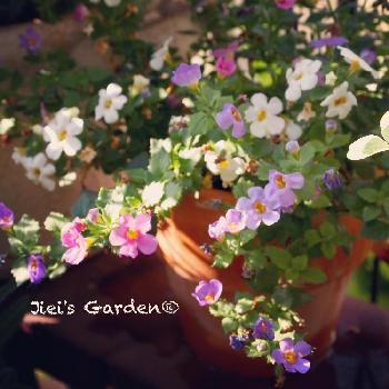 Jiei's Flowersの画像 by Jieiさん | 玄関とボタニカルボーイとJiei's Garden Storyと植物男子とJiei's Garden®︎とGS映えとJiei's FlowersとJiei's Decorationと今日の一枚とJiei's DesignとJiei's Collectionとタニラーと花のある暮らしとJiei's Share Happiness®︎とBotanical Boy