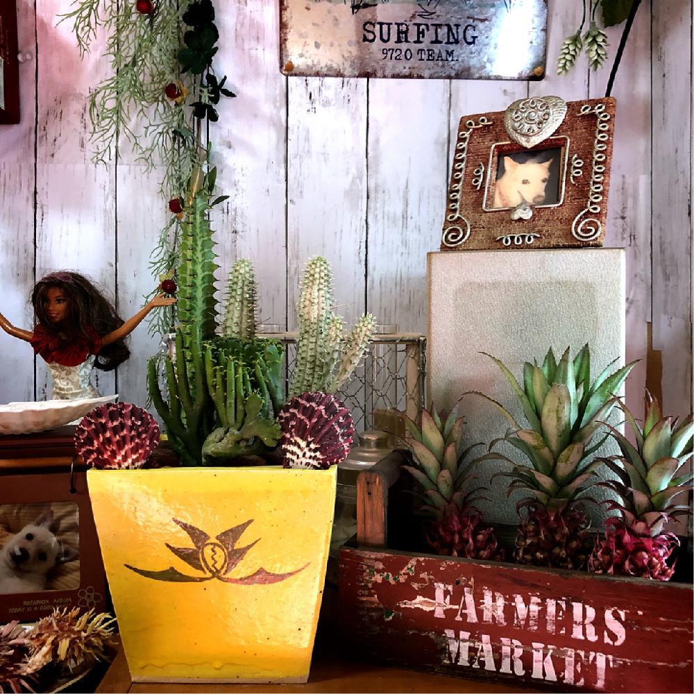 多肉植物の投稿画像kissofroseさん|手作り鉢とお気に入り♡と植え