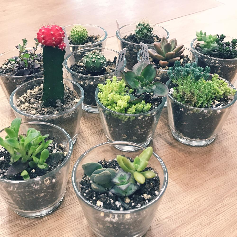 多肉植物いろいろの投稿画像junjunさん|多肉植物と寄せ植え (2018月