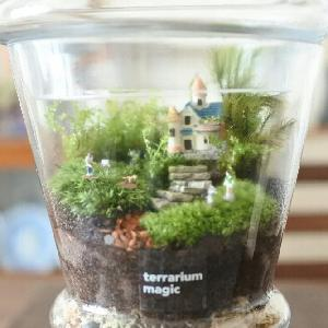 terrarium magic