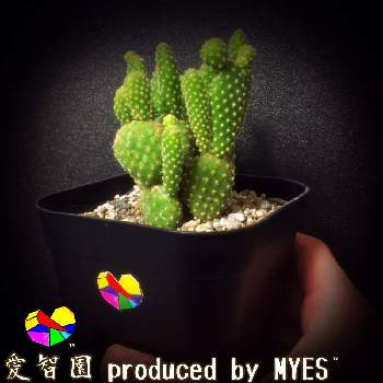 愛智園 produced by MYES™️さんの画像