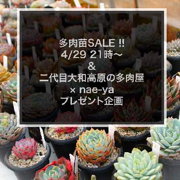herbal tree shop  nae-yaさんの画像