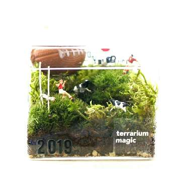 terrarium magicさんの画像