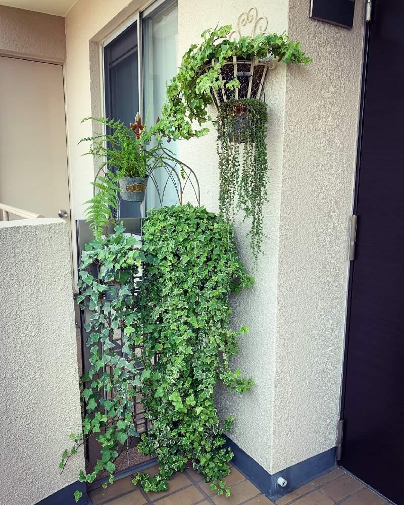 観葉 植物 に 置く 玄関