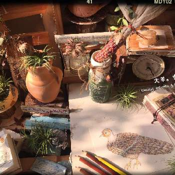 Naturalの画像 by Emilyさん | 部屋と初心者ですとdailyと大羊女子とHANDWORKS*RELAXとbeauとHandmadeと植物とGS日和とno green no lifeと植中毒と雑貨とNaturalとToday's FlowerとDIYとgreenlifeとgreenとColorfulとnatural Coco とGREEN UP!とgreat✨
