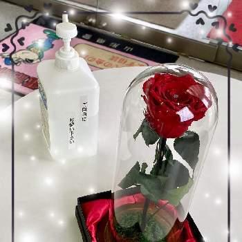おもてなし の 花 シリーズ
